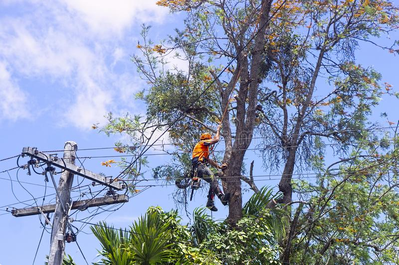 Bloomingdale-Hillsborough County FL Tree Trimming and Stump Grinding Services-We Offer Tree Trimming Services, Tree Removal, Tree Pruning, Tree Cutting, Residential and Commercial Tree Trimming Services, Storm Damage, Emergency Tree Removal, Land Clearing, Tree Companies, Tree Care Service, Stump Grinding, and we're the Best Tree Trimming Company Near You Guaranteed!
