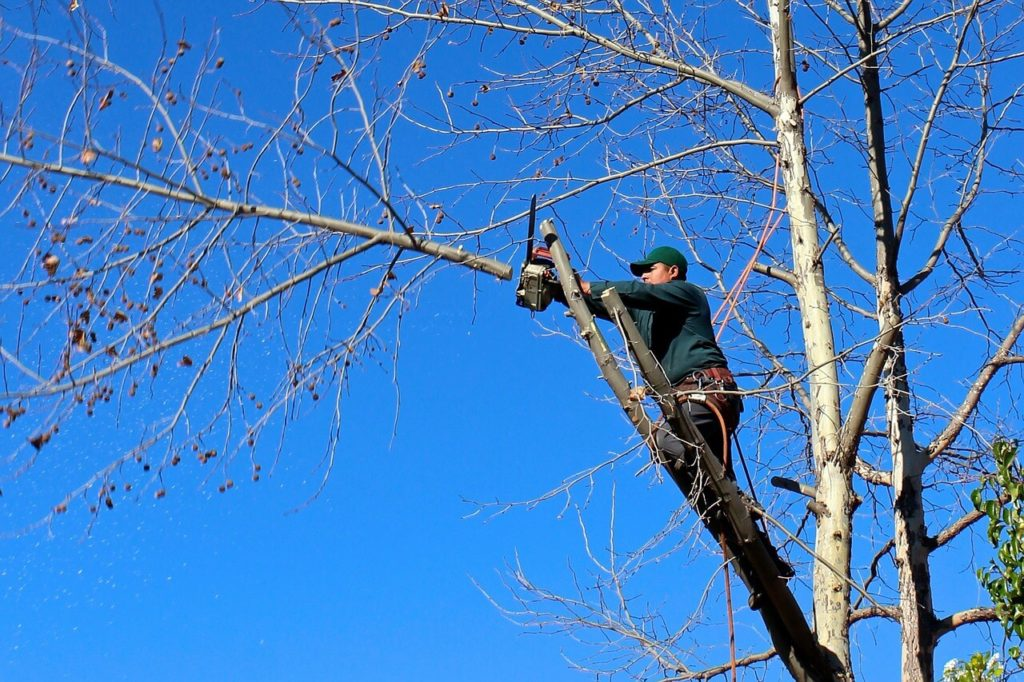 Contact Us-Hillsborough County FL Tree Trimming and Stump Grinding Services-We Offer Tree Trimming Services, Tree Removal, Tree Pruning, Tree Cutting, Residential and Commercial Tree Trimming Services, Storm Damage, Emergency Tree Removal, Land Clearing, Tree Companies, Tree Care Service, Stump Grinding, and we're the Best Tree Trimming Company Near You Guaranteed!