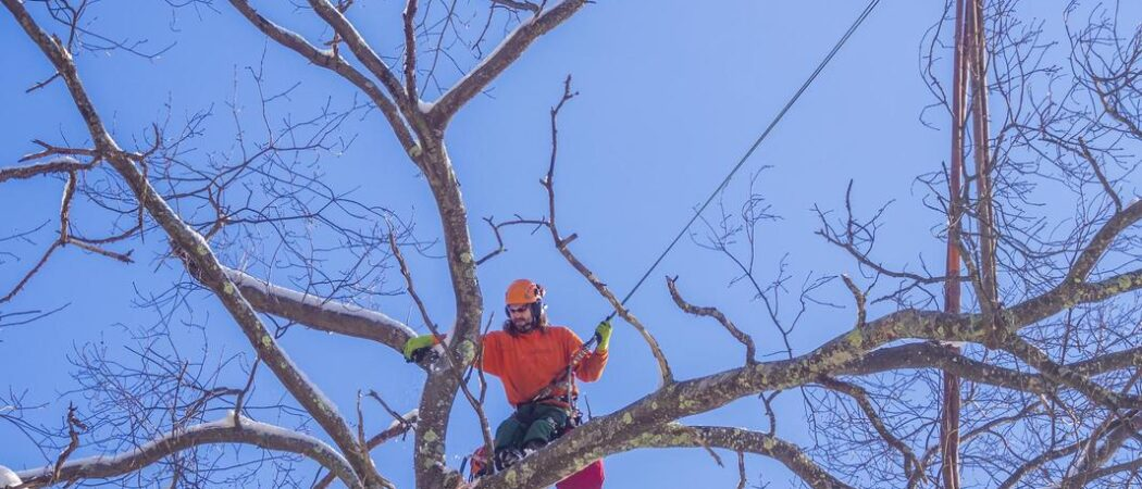 Dover-Hillsborough County FL Tree Trimming and Stump Grinding Services-We Offer Tree Trimming Services, Tree Removal, Tree Pruning, Tree Cutting, Residential and Commercial Tree Trimming Services, Storm Damage, Emergency Tree Removal, Land Clearing, Tree Companies, Tree Care Service, Stump Grinding, and we're the Best Tree Trimming Company Near You Guaranteed!