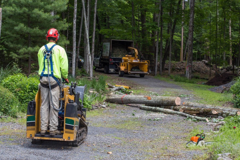 Emergency Tree Removal-Hillsborough County FL Tree Trimming and Stump Grinding Services-We Offer Tree Trimming Services, Tree Removal, Tree Pruning, Tree Cutting, Residential and Commercial Tree Trimming Services, Storm Damage, Emergency Tree Removal, Land Clearing, Tree Companies, Tree Care Service, Stump Grinding, and we're the Best Tree Trimming Company Near You Guaranteed!