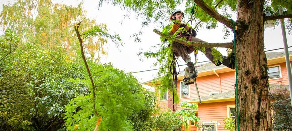Gibsonton-Hillsborough County FL Tree Trimming and Stump Grinding Services-We Offer Tree Trimming Services, Tree Removal, Tree Pruning, Tree Cutting, Residential and Commercial Tree Trimming Services, Storm Damage, Emergency Tree Removal, Land Clearing, Tree Companies, Tree Care Service, Stump Grinding, and we're the Best Tree Trimming Company Near You Guaranteed!