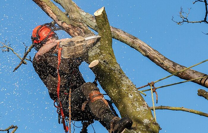 Lithia-Hillsborough County FL Tree Trimming and Stump Grinding Services-We Offer Tree Trimming Services, Tree Removal, Tree Pruning, Tree Cutting, Residential and Commercial Tree Trimming Services, Storm Damage, Emergency Tree Removal, Land Clearing, Tree Companies, Tree Care Service, Stump Grinding, and we're the Best Tree Trimming Company Near You Guaranteed!