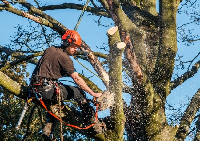 New Tampa-Hillsborough County FL Tree Trimming and Stump Grinding Services-We Offer Tree Trimming Services, Tree Removal, Tree Pruning, Tree Cutting, Residential and Commercial Tree Trimming Services, Storm Damage, Emergency Tree Removal, Land Clearing, Tree Companies, Tree Care Service, Stump Grinding, and we're the Best Tree Trimming Company Near You Guaranteed!