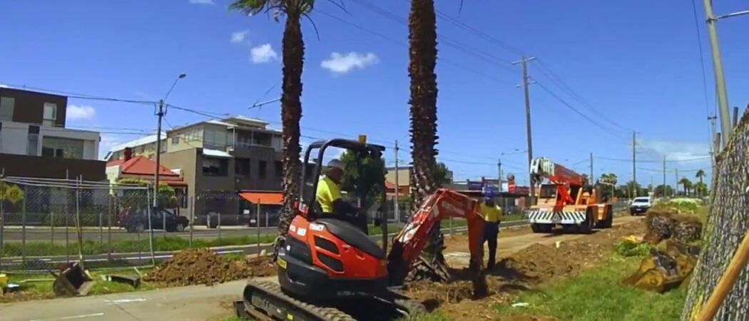 Palm Tree Removal-Hillsborough County FL Tree Trimming and Stump Grinding Services-We Offer Tree Trimming Services, Tree Removal, Tree Pruning, Tree Cutting, Residential and Commercial Tree Trimming Services, Storm Damage, Emergency Tree Removal, Land Clearing, Tree Companies, Tree Care Service, Stump Grinding, and we're the Best Tree Trimming Company Near You Guaranteed!