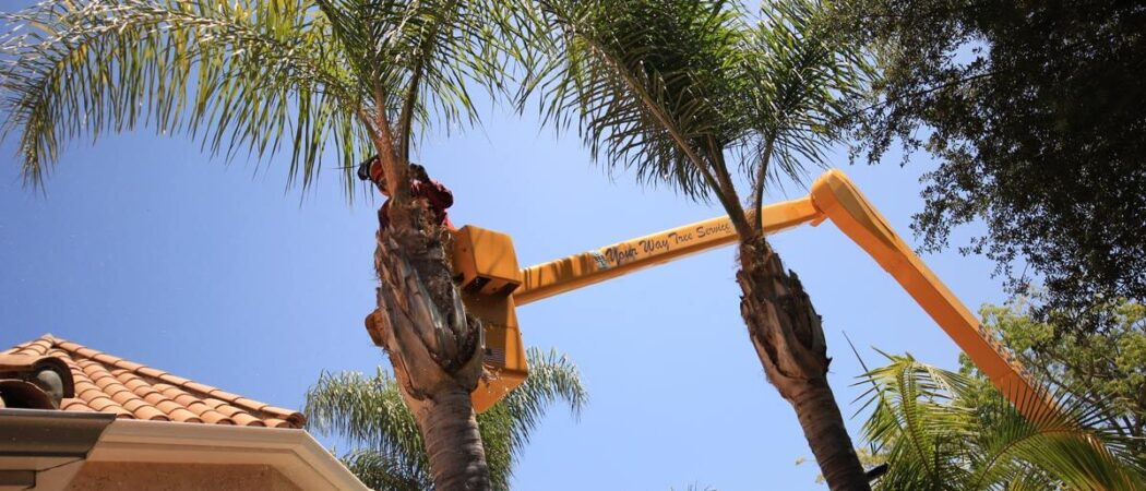 Palm Tree Trimming-Hillsborough County FL Tree Trimming and Stump Grinding Services-We Offer Tree Trimming Services, Tree Removal, Tree Pruning, Tree Cutting, Residential and Commercial Tree Trimming Services, Storm Damage, Emergency Tree Removal, Land Clearing, Tree Companies, Tree Care Service, Stump Grinding, and we're the Best Tree Trimming Company Near You Guaranteed!