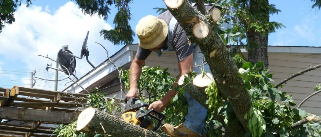 Plant City-Hillsborough County FL Tree Trimming and Stump Grinding Services-We Offer Tree Trimming Services, Tree Removal, Tree Pruning, Tree Cutting, Residential and Commercial Tree Trimming Services, Storm Damage, Emergency Tree Removal, Land Clearing, Tree Companies, Tree Care Service, Stump Grinding, and we're the Best Tree Trimming Company Near You Guaranteed!