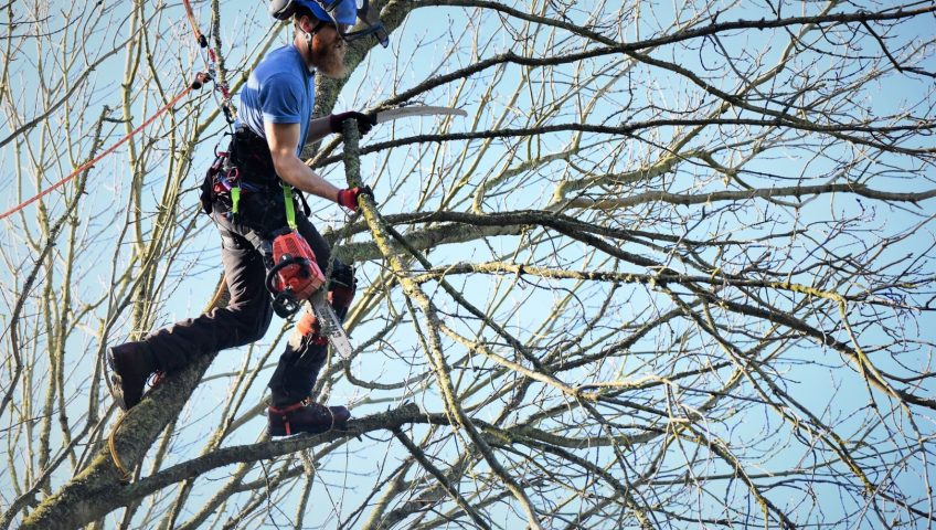 Ruskin-Hillsborough County FL Tree Trimming and Stump Grinding Services-We Offer Tree Trimming Services, Tree Removal, Tree Pruning, Tree Cutting, Residential and Commercial Tree Trimming Services, Storm Damage, Emergency Tree Removal, Land Clearing, Tree Companies, Tree Care Service, Stump Grinding, and we're the Best Tree Trimming Company Near You Guaranteed!