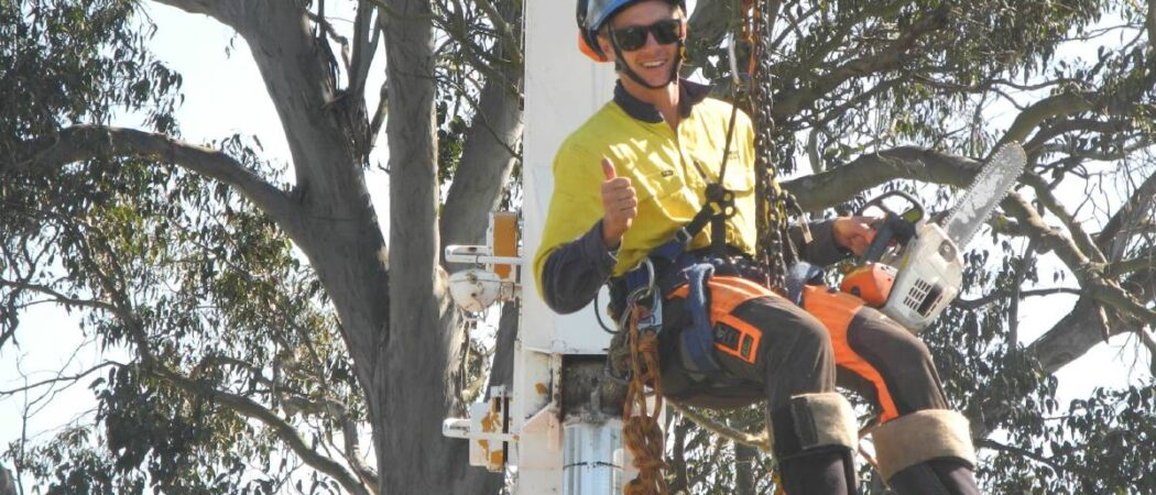 Seffner-Hillsborough County FL Tree Trimming and Stump Grinding Services-We Offer Tree Trimming Services, Tree Removal, Tree Pruning, Tree Cutting, Residential and Commercial Tree Trimming Services, Storm Damage, Emergency Tree Removal, Land Clearing, Tree Companies, Tree Care Service, Stump Grinding, and we're the Best Tree Trimming Company Near You Guaranteed!