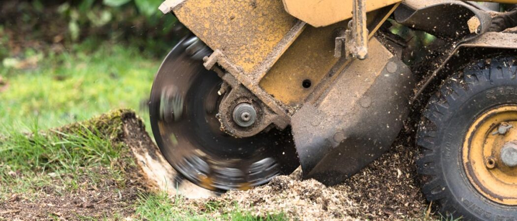 Stump Grinding-Hillsborough County FL Tree Trimming and Stump Grinding Services-We Offer Tree Trimming Services, Tree Removal, Tree Pruning, Tree Cutting, Residential and Commercial Tree Trimming Services, Storm Damage, Emergency Tree Removal, Land Clearing, Tree Companies, Tree Care Service, Stump Grinding, and we're the Best Tree Trimming Company Near You Guaranteed!