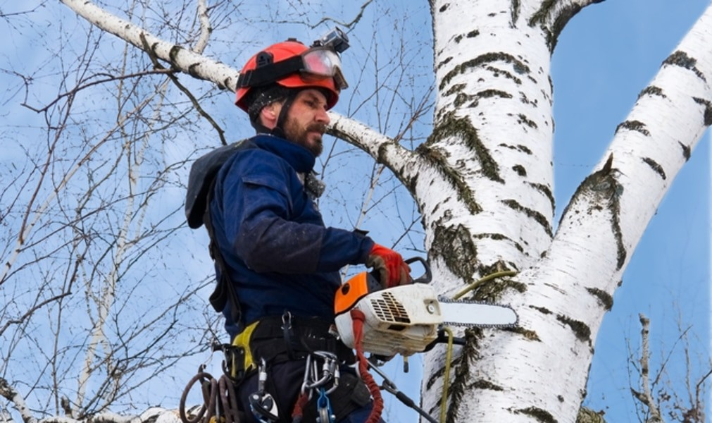 Thonotosassa-Hillsborough County FL Tree Trimming and Stump Grinding Services-We Offer Tree Trimming Services, Tree Removal, Tree Pruning, Tree Cutting, Residential and Commercial Tree Trimming Services, Storm Damage, Emergency Tree Removal, Land Clearing, Tree Companies, Tree Care Service, Stump Grinding, and we're the Best Tree Trimming Company Near You Guaranteed!