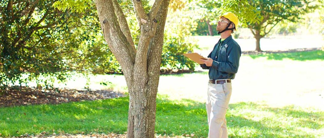 Town 'n' Country-Hillsborough County FL Tree Trimming and Stump Grinding Services-We Offer Tree Trimming Services, Tree Removal, Tree Pruning, Tree Cutting, Residential and Commercial Tree Trimming Services, Storm Damage, Emergency Tree Removal, Land Clearing, Tree Companies, Tree Care Service, Stump Grinding, and we're the Best Tree Trimming Company Near You Guaranteed!