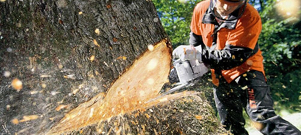 Tree Cutting-Hillsborough County FL Tree Trimming and Stump Grinding Services-We Offer Tree Trimming Services, Tree Removal, Tree Pruning, Tree Cutting, Residential and Commercial Tree Trimming Services, Storm Damage, Emergency Tree Removal, Land Clearing, Tree Companies, Tree Care Service, Stump Grinding, and we're the Best Tree Trimming Company Near You Guaranteed!