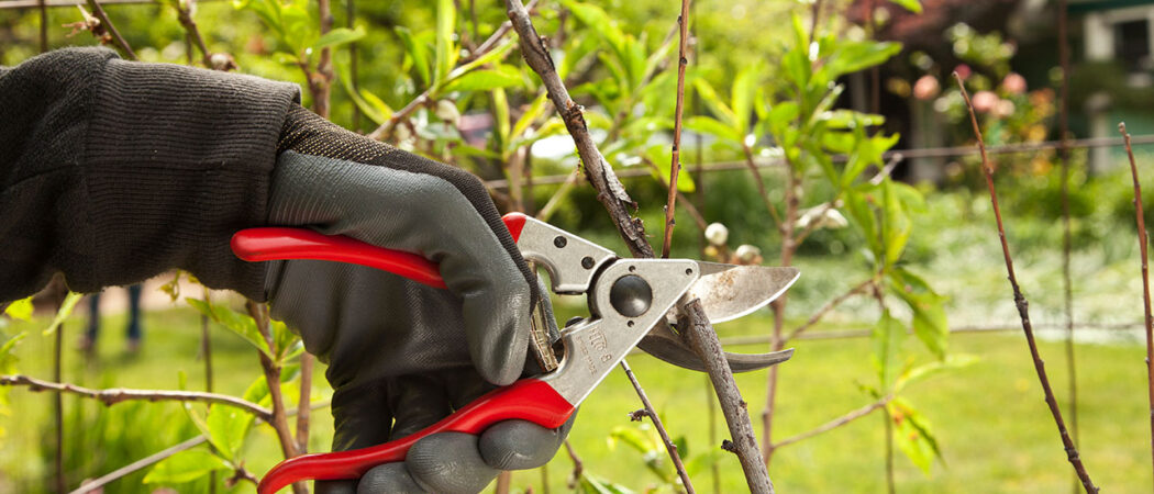 Tree Pruning-Hillsborough County FL Tree Trimming and Stump Grinding Services-We Offer Tree Trimming Services, Tree Removal, Tree Pruning, Tree Cutting, Residential and Commercial Tree Trimming Services, Storm Damage, Emergency Tree Removal, Land Clearing, Tree Companies, Tree Care Service, Stump Grinding, and we're the Best Tree Trimming Company Near You Guaranteed!