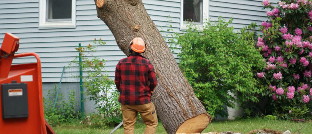 Tree Removal-Hillsborough County FL Tree Trimming and Stump Grinding Services-We Offer Tree Trimming Services, Tree Removal, Tree Pruning, Tree Cutting, Residential and Commercial Tree Trimming Services, Storm Damage, Emergency Tree Removal, Land Clearing, Tree Companies, Tree Care Service, Stump Grinding, and we're the Best Tree Trimming Company Near You Guaranteed!