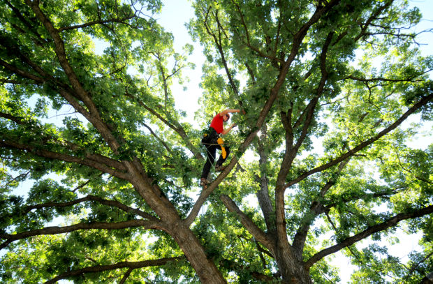 Wesley Chapel-Hillsborough County FL Tree Trimming and Stump Grinding Services-We Offer Tree Trimming Services, Tree Removal, Tree Pruning, Tree Cutting, Residential and Commercial Tree Trimming Services, Storm Damage, Emergency Tree Removal, Land Clearing, Tree Companies, Tree Care Service, Stump Grinding, and we're the Best Tree Trimming Company Near You Guaranteed!