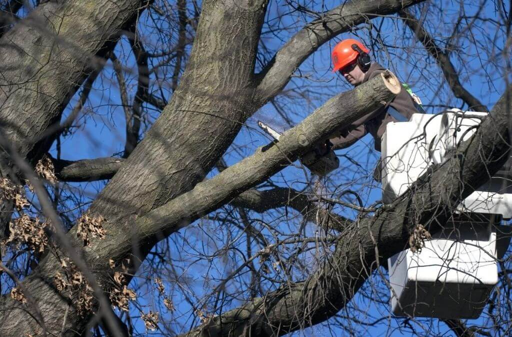 Wimauma-Hillsborough County FL Tree Trimming and Stump Grinding Services-We Offer Tree Trimming Services, Tree Removal, Tree Pruning, Tree Cutting, Residential and Commercial Tree Trimming Services, Storm Damage, Emergency Tree Removal, Land Clearing, Tree Companies, Tree Care Service, Stump Grinding, and we're the Best Tree Trimming Company Near You Guaranteed!
